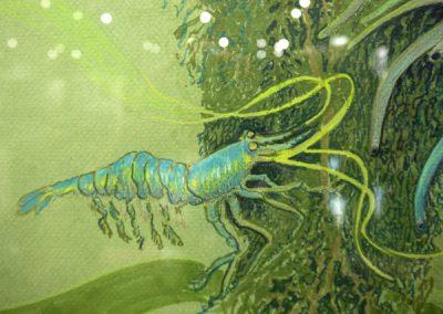 Greavu.shrimps2